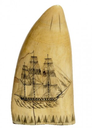 Sperm whale tooth polychrome engraved with a broadside portrait of a Constitution class American Navy frigate